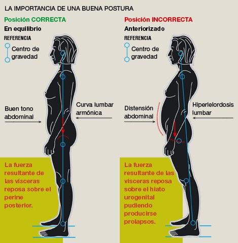 Importancia de abdominales. Posición erguida.