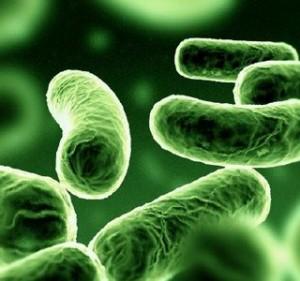 (Bacteria. Ilustración)